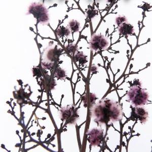プリザーブドフラワー 材料 スターリンジャー パープル 小分け 約1本入 プリザーブドフラワー 花材 大地農園|solargift