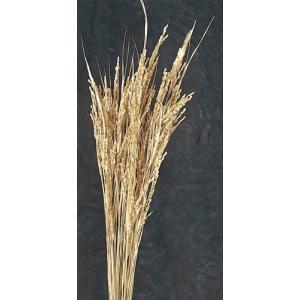 稲穂 イナホ ゴールド 袋 約50本入 プリザーブドフラワー 材料 花材 大地農園|solargift