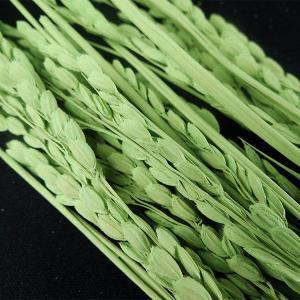 稲穂 イナホ ライトグリーン 小分け 約10本入 プリザーブドフラワー 花材 材料 大地農園|solargift