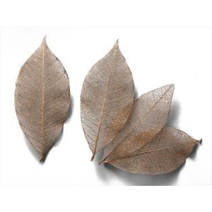 大地農園 ミニスケルトンリーフ 大 ゴールド 小分け 約5枚入 プリザーブドフラワー 材料 葉|solargift