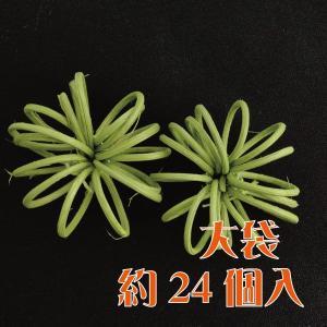 ラタスパイラル グリーン 袋 24個入 デコ|solargift