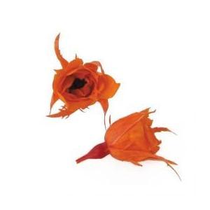 プリザーブドフラワー 花材 マイクロ ローズ タンジェリンオレンジ 20輪 フロールエバー|solargift