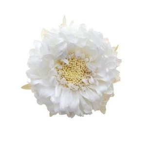 プリザーブドフラワー 花材 アスター パールホワイト 6輪 マム フロールエバー|solargift