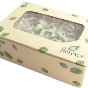 チューベローズ パールホワイト 箱 8輪入 プリザーブドフラワー 材料 花材 フロールエバー|solargift