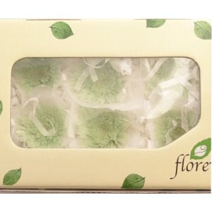 プリザーブドフラワー 菊 スプレーマム ミントグリーン 6輪 花材フロールエバー|solargift