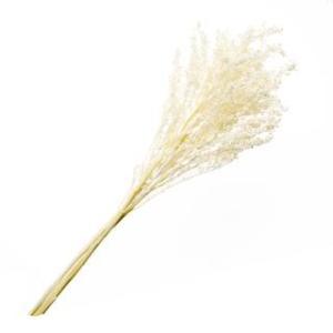 プリザーブドフラワー 花材 ソリダゴ パールホワイト 袋 約3本入 フロールエバー|solargift