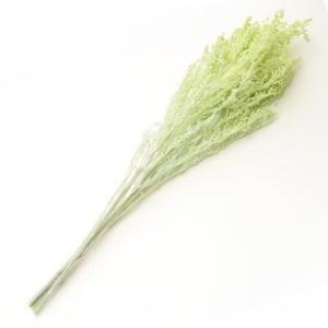 プリザーブドフラワー 花材 ソリダゴ シトラスグリーン 袋 約3本入 フロールエバー|solargift