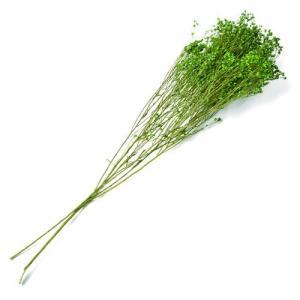 ドライフラワー 花材 ブルーム グリーン 約20g フロールエバー solargift