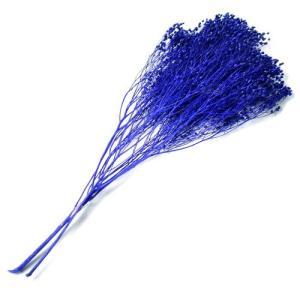 ドライフラワー 花材 ブルーム パープル 袋 約20g フロールエバー solargift