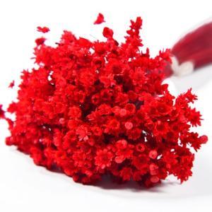 ドライフラワー 花材 マルセラ ドライ レッド 約15g フロールエバー|solargift