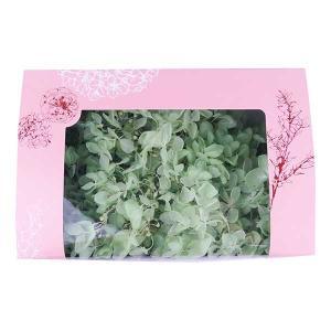 プリザーブドフラワー 花材 材料 ソフトアジサイ水無月 フレッシュグリーン 箱 約2輪入|solargift