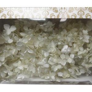 プリザーブドフラワー 花材 紫陽花 ソフトアジサイアナベルスプラッシュ カスタード 箱 約2.5輪|solargift