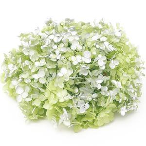 プリザーブドフラワー 花材 紫陽花 ソフトアジサイアナベルスプラッシュ グリーン 箱 約2.5輪|solargift