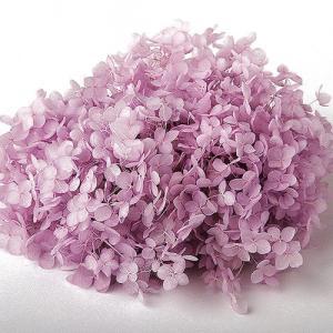 プリザーブドフラワー 花材 紫陽花 ソフトアジサイアナベル パープル 箱 約2.5輪|solargift