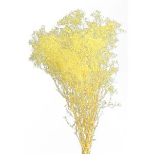かすみ草 大地農園 ソフトミニカスミソウ イエローラメ 袋 約22g|solargift