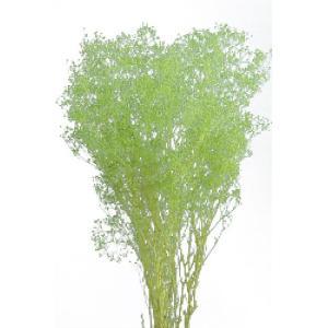 ソフトミニカスミソウ グリーンラメ 袋 約22g入 かすみ草 大地農園材料 花材|solargift