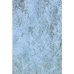 プリザーブドフラワー かすみ草 ソフトミニカスミ草・ヘッド ラベンダー 約7g 大地農園 solargift