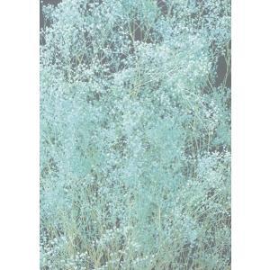 プリザーブドフラワー かすみ草 ソフトミニカスミ草・ヘッド ブルー 約7g 大地農園 solargift