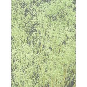 プリザーブドフラワー かすみ草 ソフトミニカスミ草・ヘッド ミントグリーン 約7g 大地農園 solargift