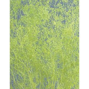 プリザーブドフラワー かすみ草 ソフトミニカスミ草・ヘッド エンジェルグリーン 約7g 大地農園 solargift