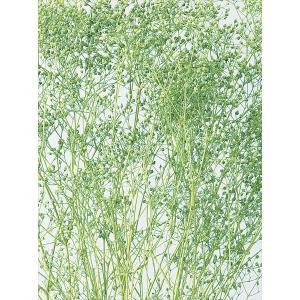 かすみ草 プリザーブド ソフトミニカスミ草・ヘッド ヴェールグリーン 約7g 大地農園 solargift