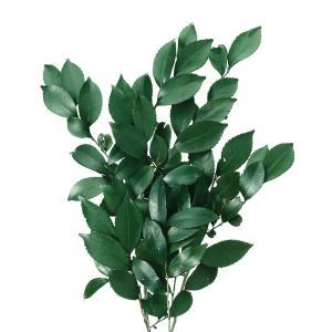 プリザーブドフラワー 材料 ヒサカキ プリザーブド グリーン 袋 プリザーブドフラワー 花材 大地農園|solargift