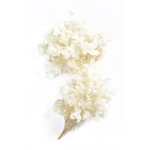 プリザーブドフラワー 材料 花材 カシワバアジサイ オフホワイト 箱 2輪入 あじさい 紫陽花 大地農園|solargift