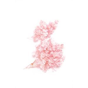 プリザーブドフラワー 材料 花材 カシワバアジサイ ピンク 箱 2輪入 あじさい 紫陽花 大地農園|solargift