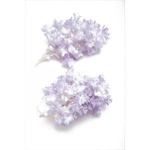 プリザーブドフラワー 材料 花材 カシワバアジサイ ホワイトパープル 箱 2輪入 あじさい 紫陽花 大地農園|solargift