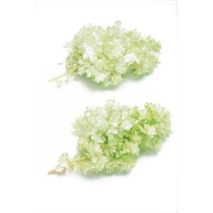 プリザーブドフラワー 花材 カシワバアジサイ ホワイトグリーン 箱 2輪 大地農園|solargift