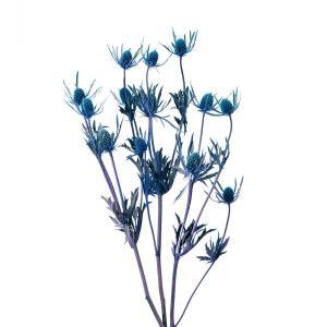 プリザーブド 花材 エリンジューム パープル 約35g 大地農園|solargift