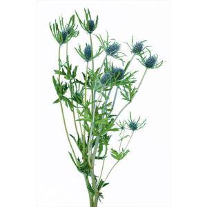 プリザーブド 花材 エリンジューム グリーン 約35g 大地農園|solargift