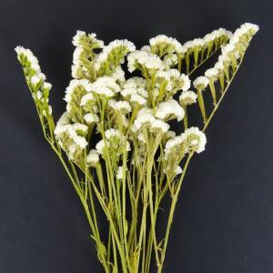 プリザーブドフラワー 材料 花材 ソフトスターチス 白 袋 約30g入 小花 プリザーブドフラワー 材料 大地農園|solargift