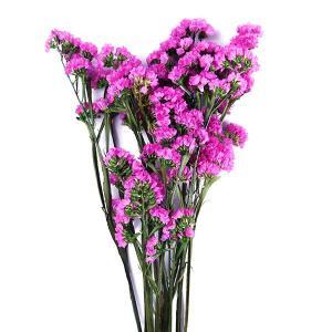 ソフトスターチス プリザーブドフラワー 材料 ピンク 袋 約30g入 プリザーブドフラワー 花材 小花 大地農園|solargift