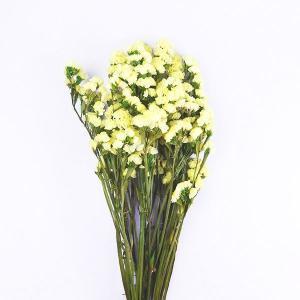 プリザーブドフラワー 材料 ソフトスターチス イエロー 袋 約30g入 プリザーブドフラワー 花材 小花 大地農園|solargift