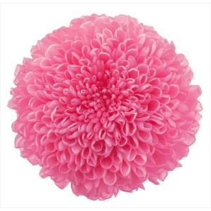 プリザーブドフラワー 花材 菊 ピンポンマム ミディー ももいろ 箱 9輪 大地農園 solargift