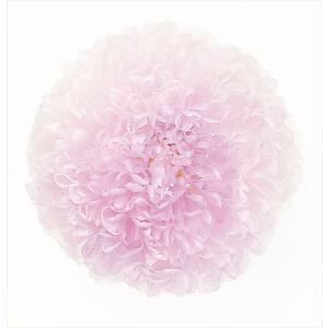 プリザーブドフラワー 花材 菊 ピンポンマム ミディー ホワイトパープル 箱 9輪 大地農園 solargift
