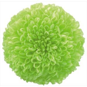 プリザーブドフラワー 花材 菊 ポンポン菊 ミディー グリーン 箱 9輪 大地農園|solargift