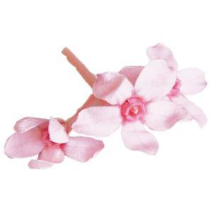 ブルースター プリザーブドフラワー 花材 ピンク 箱 約20輪 大地農園 solargift