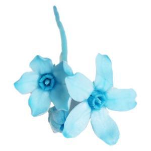 ブルースター プリザーブドフラワー 花材 ブルー 箱 約20輪 大地農園 solargift