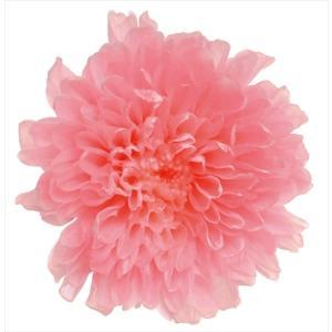 プリザーブドフラワー 小菊 ピンク 箱 12輪 マム 大地農園|solargift
