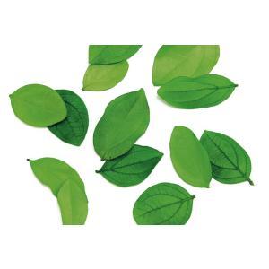 バルサムリーフ フレッシュグリーン 袋 約20枚入 プリザーブドフラワー 材料 花材 グリーン リーフ 大地農園 solargift