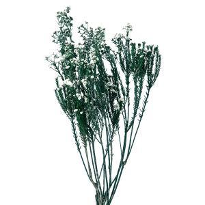 プリザーブドフラワー 花材 フレンチフィリカ 白 袋 約45g 材料 大地農園|solargift