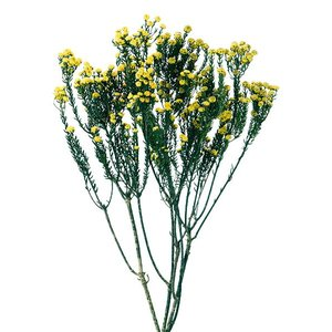 プリザーブドフラワー 花材 フレンチフィリカ イエロー 袋 約45g 材料 大地農園|solargift