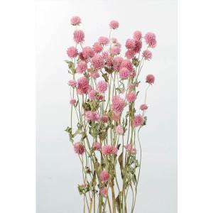千日紅 ピンク xa-oh-10120-100 ナチュラルドライ 大地農園|solargift