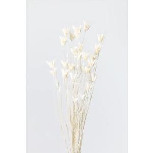 大地農園 ドライフラワー ニゲラオリエンタリス 白 約30g|solargift