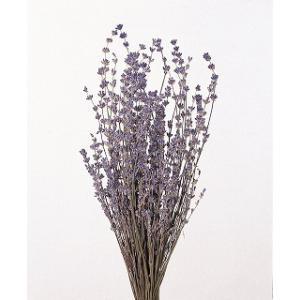 プリザーブドフラワー 花材 イングリッシュラベンダー N 袋 約30g入 プリザーブドフラワー 材料 大地農園 solargift