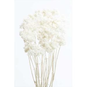 ドライフラワー 花材 クリスパム 白 15g|solargift