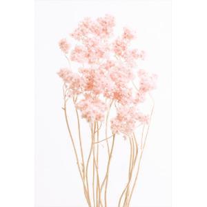ドライフラワー 花材 クリスパム エンジェルピンク 15g|solargift
