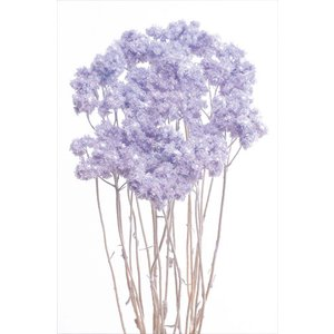 ドライフラワー 花材 クリスパム エンジェルパープル 15g|solargift